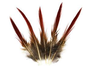 Fasanenfedern Goldfasan Sprössl 10-15cm Fasan Feder Indianer Traumfänger
