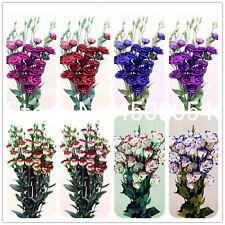 Eustoma Bonsai Perennial Seeds Plants Flowering Balcony Potted Flowers 100pcs