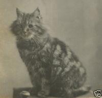 VINTAGE ANTIQUE KITTY KITTEN PORTRAIT ARTISTIC FELINE WHISKERS MEOW OLD PHOTO