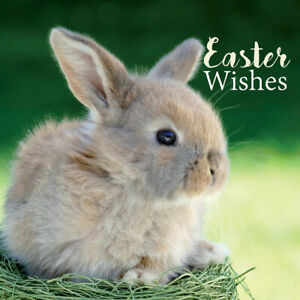 Easter Card Pack - Bunny