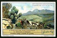Echinocactus Cactus Flower Blossom Plant 1930s Trade Ad Card