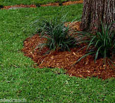 DoubleEagle Centipede Grass Seed - 1/2 Lb. Certified