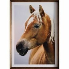 Beautiful Horse - Framed Print with Tasmanian Oak Frame