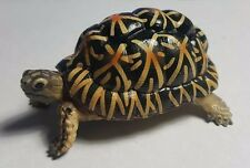 Yujin Star Tortoise Turtle PVC Model Mini Figurine figure