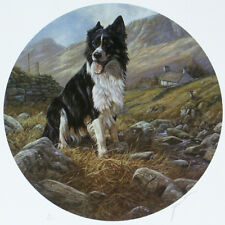 BORDER COLLIE WORKING SHEEPDOG DOG ART LIMITED EDITION PRINT by John Trickett