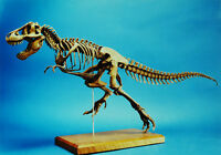 Tyrannosaurus Rex T-Rex Dinosaur Skeleton Unpainted Figure Model Resin Kit