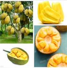 Jackfruit Seeds (Artocarpus altilis),Tropical Novelty Organic Fruit Seed - 5pcs