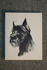 Schnauzer Pen and Ink Stationary Cards, Note Cards, Greeting Cards. 10 pack.