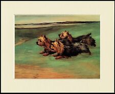 YORKSHIRE TERRIER THREE DOGS RUNNING LOVELY DOG PRINT MOUNTED READY TO FRAME