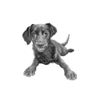 Patterdale terrier greetings card
