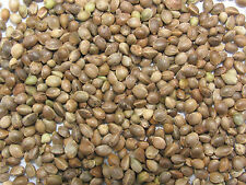 Bird Seeds Organic Hemp Seed Bird Food 100g Feed Birds Seeds in Your Garden