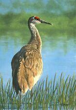 Original Sand hill Crane pastel painting, 15 X 20, framed