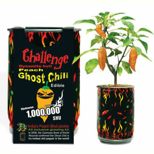 Peach Ghost Chili Pepper Growing Kit Can DIY Plant Home Garden Gift Bhut Jolokia