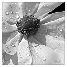 "Anemone Poppy In Black And White 12""x12"" Floral Botanical Fine Art Print"