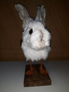 Stuffed European duck rabbit Taxidermy rabbit head/duck torso