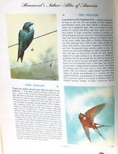 Nature Atlas of America Hammonds 320 Color Paintings 34 Color Maps Wildlife Book