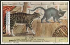 European Cat and Chartreux Cat Chat 50 Y/O Trade Ad Card