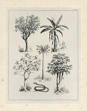 Antique Print-SURINAME-PAPAYA-ORANGE-BANANA-BREADFRUIT-Lauters-Benoit-1839