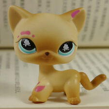Muddy Brown Short Hair Kitty Cat LPS Action Figure #816 LITTLEST PET SHOP