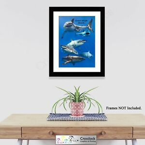 Great White Shark Collage Sea Life Photo Poster Print ONLY Wall Art A4
