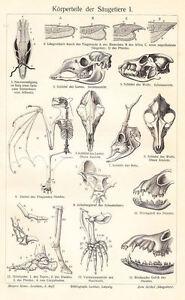 Framed Print - Antique Animal Anatomy (Picture Vintage Medical Veterinary Art)