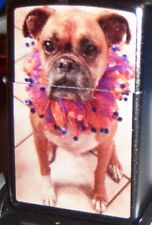 Zippo Pipi The Pit Bull Goes To Mardi Gras-.Chrome Lighter Mint In Box