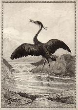EAU FORTE / Fables de la Fontaine 1883 / LE HERON
