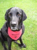 Personalised Dog Bandana ANY NAME EMBROIDERED Ideal Gift Slide on