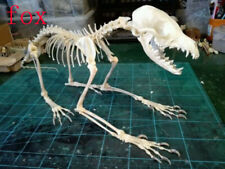 1Pcs Real Animal Skull complete skeleton specimen