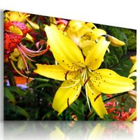 YELLOW LILLY FLOWER FIELD Abstract Modern Canvas Wall Art Picture  L505 X MATAGA