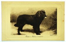 Cartolina Cane (D'Apres Nature) – Terre-Neuve (Noir)