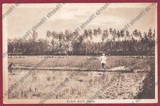 MONDINE 138 MONDARISO RISO RISAIA LAVORI AGRICOLI MESTIERI Cartolina viagg. 1934