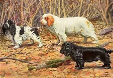 Vintage Cocker Clumber & Field Spaniel Dog Hunting In Brush 1919 Rare Art Print