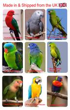Parrots 9 Various Colorful Flexible Fridge Magnets Macaw African Grey Parakeet
