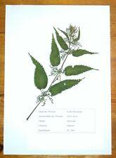 Herbarium, 10 Heilpflanzen, Preiswert.