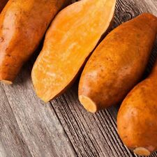 1 Pack 20 Yellow Sweet Potatoes Seed Delicious Green Vegetable Garden Plant S094