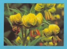 FLOWERS - GARDENERS' WORLD MAGAZINE POSTCARD SIZED CARD  - SUMMER BULBS    ( B )