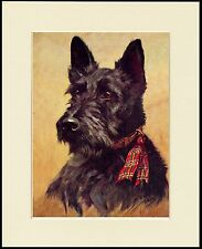 SCOTTISH TERRIER SCOTTIE HEAD LOVELY LITTLE DOG PRINT MOUNTED READY TO FRAME