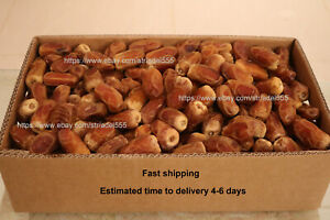 Fresh Dates 3KG From Saudi Arabia [ Segay Dates ] FAST Shipping