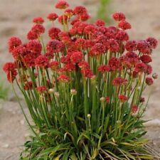 pour 1000 mâ² Fleurs Prairie 1 kg fleurs Jardin Abeilles Pâturage blühmischung
