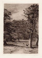 "Original Frederick SLOCOMBE 1800s Etching ""The Deer of Windsor Park"" SIGNED COA"
