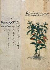 """Blanc Swallow-Wort """"Un Japonais à base de plantes"""" 17th Century plant Anatomy Poster"""