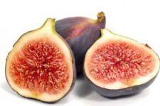 Brown Sugar Fig Dupe Perfume Fragrance Roll on Oil Bottle BBW Type Fruit Scent
