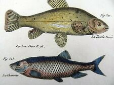 1790 FOLIO Bonnaterre CARP TENCH GOLD-SKELLY hand colored Engraving