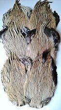 Badger cock cape, grade aaa, matériaux pour mouches