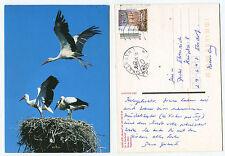 21221 - Weißstörche - Polen - Ansichtskarte, gelaufen Ketrzyn 24.5.2005