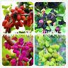 Heirloom Fruit Bonsai Seeds Plants Blackberry Sweet Giant Blackberries Triple Cr
