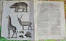 1784 Ancienne Gravure Estampes EO. Hippopotame,Daman-Israël,Girafe,Porc-Épic