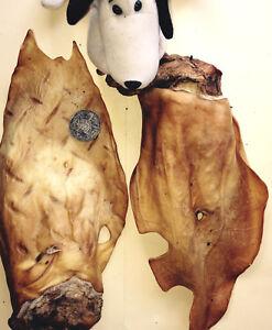 Dog Treats Chews. 40 Huge Beef Cow Ears with Scroll. Oz. Bigger than Pig Ears.