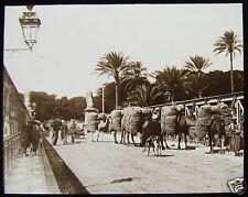 Glass Magic Lantern Slide LOADED CAMELS ON THE KASR-EL-BRIDGE C1910 EGYPT PHOTO
